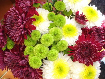 Chrysanthemums Should Already Be Familiar To You If Have Any Interest In Tropical Flowers At All Given Their Pority One Of The Things Which Make